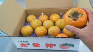 20161024熊本の太秋柿